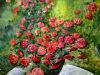 390 Anno 2012. Rose del mio giardino