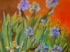 452 Anno 2013 Iris bianchi e blu.